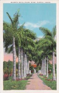 Florida Miami Majestic Royal Palms