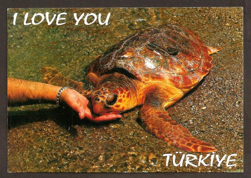 TURKEY LARGE POSTCARD/ USED CARETTA-CARETTA-DALYAN-KAUNOS