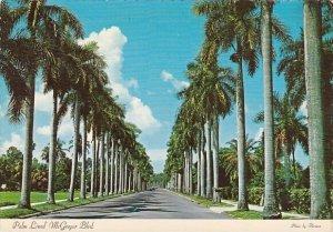Florida Fort Myers Royal Palms Line Beautiful Mcgregor Boulevard