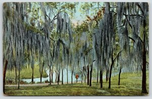 Jacksonville Florida~Phoenix Park Oak Grove~Man Strolls Thru Spanish Moss~1909