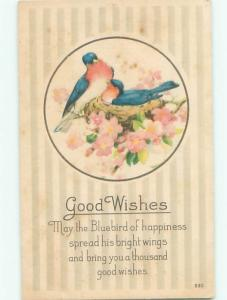 Divided-Back BIRDS SCENE Pretty Postcard AA9172