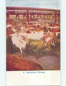 Unused Divided-Back COWS IN STOCKYARDS BEFORE SLAUGHTER HOUSE Chicago IL p1334