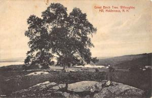 Holderness New Hampshire Willoughby Hill Great Birch Tree Postcard K97074