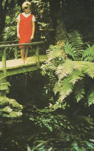 Girl On Bridge at Native Fern & Plants Pool Rotoria NZ Postcard