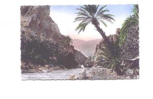 Man Sitting at Gorge, Palm Tree,  Algeria