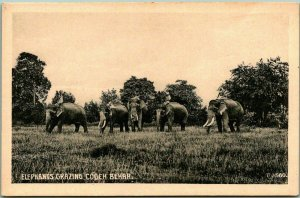 COOCH BEHAR, Bengal, INDIA Postcard Elephant Grazing Printed in Germany c1910s