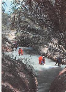 Tunisia Washerwomen of the Oases, Les lavandeires de l'Oasis