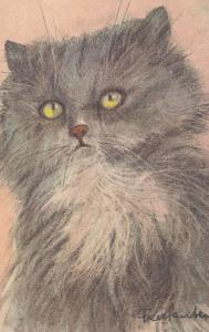 AS; Portrait of Grey Cat with Yellow Eyes, 1900-10s