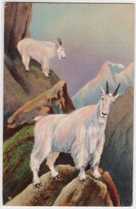 Mt Goat AK