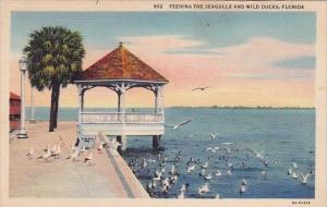 Florida Jacksonville Feeding The Seagulls And Wild Ducks