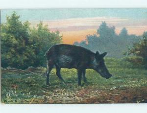 Divided-Back RAZORBACK HOG PIG state of Florida HM6924
