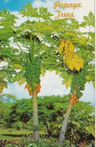 Hawaii Typical Papaya Trees