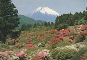 Mount Fuji, Japan - Blooming Azalea Flowers