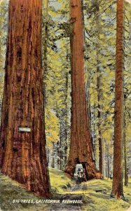 BIG TREES CALIFORNIA REDWOODS-HORSE PULLED WAGON THROUGH TUNNEL~1910s POSTCARD
