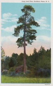 North Carolina Southern Pines Long Leaf Pine Tree 1946 Curteich