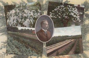 DUNDEE , Illinois; 1910 ; D. Hill's Gardens