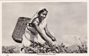 Sri Lanka Ceylon Native Tea Plucker Real Photo