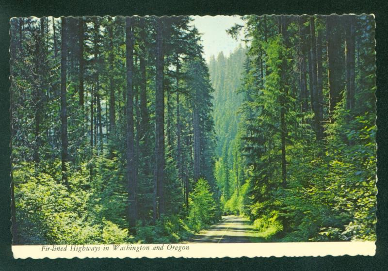 Pacific Northwest Fir Tree Lined Highway OREGON WASHINGTON Forest OR Postcard