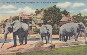 Chicago Zoological Park Elephants