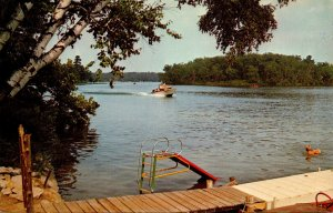 Wisconsin Wausau White Birch Trees Along Lake