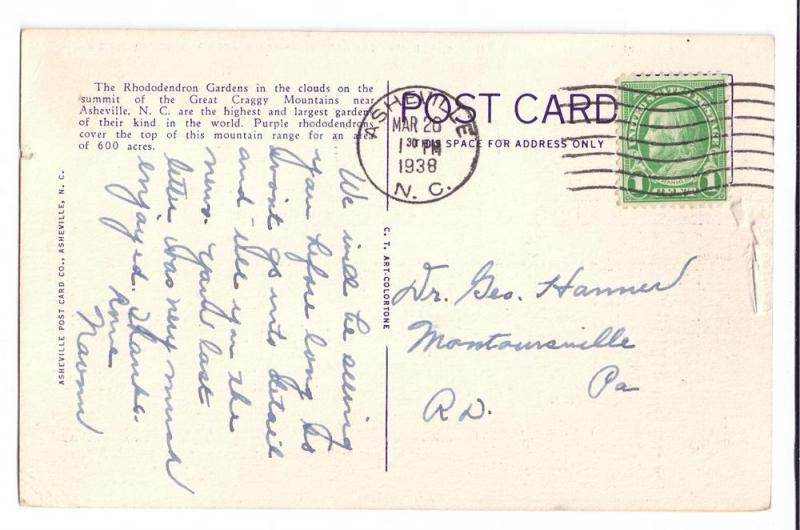 Asheville NC Mountains Rhododendron 1938 Linen Postcard