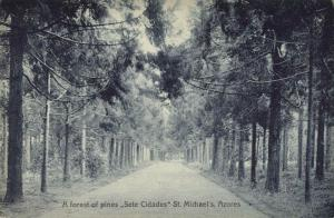 portugal, Azores Acores, SAÕ MIGUEL, FURNAS, Forest of Pines, Sete Cidades 1910s