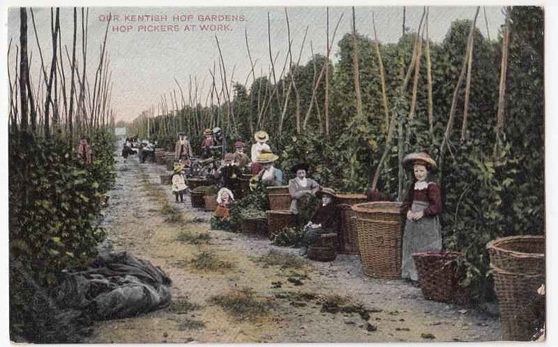 Social History; Kentish Hop Gardens, Hop Pickers At Work PPC By JWA, Unposted