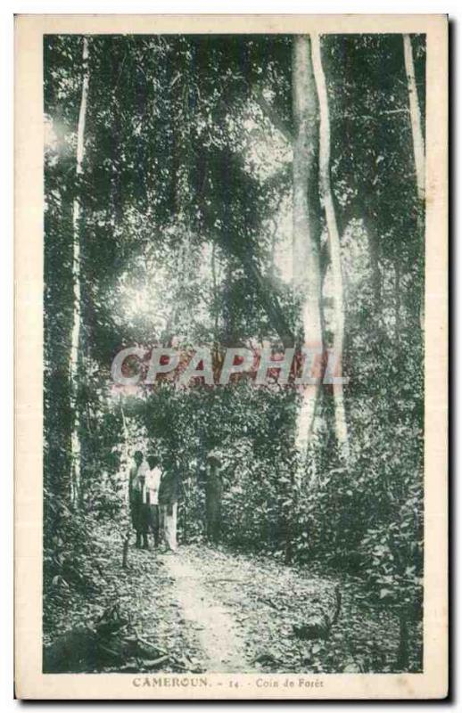 Africa - Africa - Cameroun - a Corner of forest - CPA