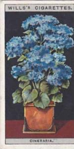 Wills Vintage Cigarette Card Flower Culture In Pots No 17 Cineraria  1925