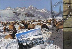 Wyoming Jackson National Elk Refuge