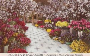 Flower Display Podesta & Baldocchi Florists San Francisco California