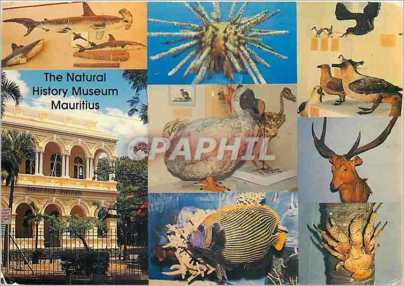 Modern Postcard Mauritius the Museum of Natural History