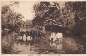 Watering Horses in an Australian River , 1910-30s