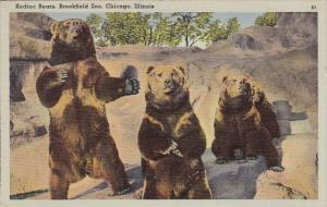 Kodiac Bears Brookfield Zoo Chicago Illinois 1945