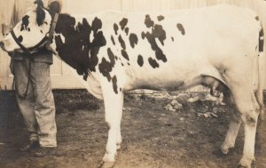 RP: Dairy Cow , 1900-10s