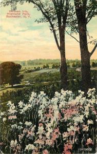 Rochester New York~Highland Park Panorama~Pink & White German Iris~1910 Postcard
