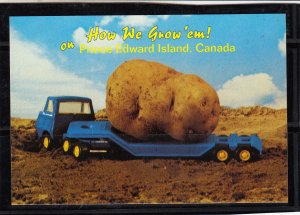 P1766 vintage prince edward island canada we grow em big potatoes postcard