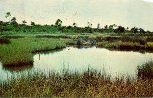 South Carolina Hilton Head Island Wildlife Sanctuary 1966