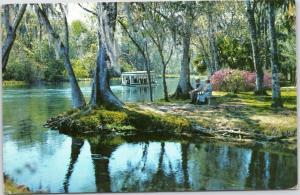 Scenic River scene along Silver River in Silver Springs Florida