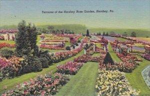 Terraces Of The Hershey Rose Garden Hershey Pennsylvania 1951