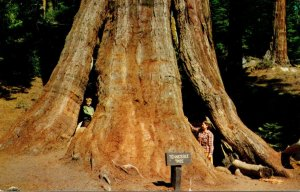 California Kings Canyon National Park The Tennessee Tree General Grant Grove ...