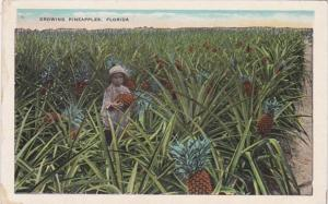 Florida Typical Pineapple Field