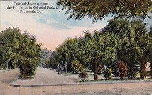 Tropical Scene Among The Palmettos In Colonial Park Savannah Georgia