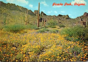Arizona Picacho Peak Cactus and Blooming Flora