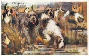 Dogs Otterhounds Postcard