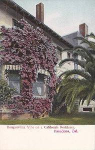 Bouganvillea Vine on a California Residence, Pasadena, California, 00-10s
