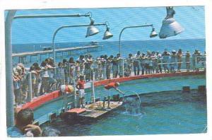 Gulfarium, Fort Walton Beach, Florida,   PU- 40-60s