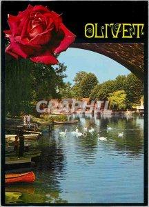 Modern Postcard Olivet (Loiret) The edges of Loiret Swans