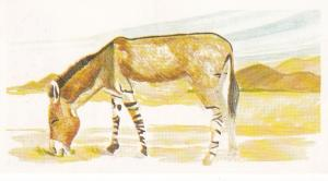 Trade Card Brooke Oxo Vanishing Wildlife No 26 Somali Wild Ass