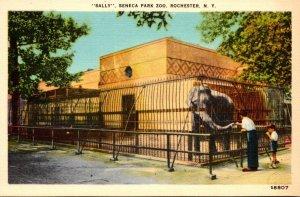 New York Rochester Sally The Elephant Seneca Park Zoo